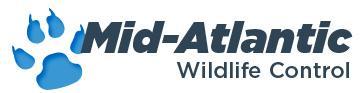 Mid-Atlantic Wildlife Control