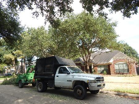 Leon Tree Service - Katy, TX 77493 - (832)466-2317 | ShowMeLocal.com
