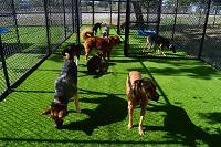 Love My Dog Resort & Playground-Downtown