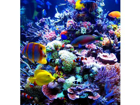 Neptunes Aquariums