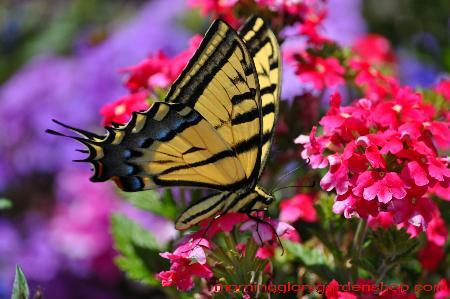 Morning Glory Garden Shop - Colorado Springs, CO 80918 - (719)380-8781   ShowMeLocal.com
