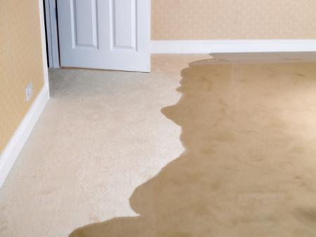 Santee Speedy Carpet Cleaners - Santee, CA 92071 - (619)821-2615 | ShowMeLocal.com