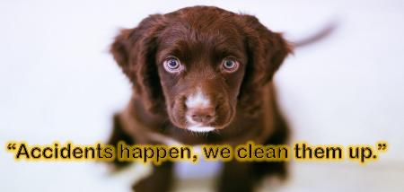 OOPS Steam Cleaning - Houston, TX 77009 - (281)822-0561 | ShowMeLocal.com