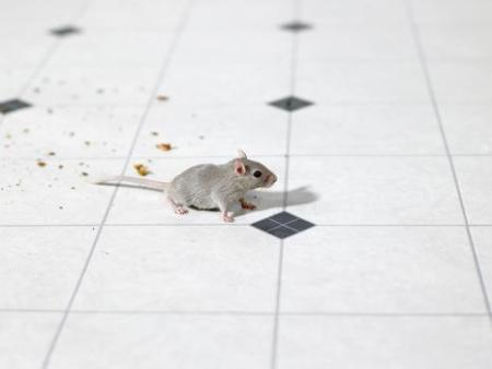 Get Rid Pest Control