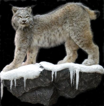 Nature S Way Taxidermy