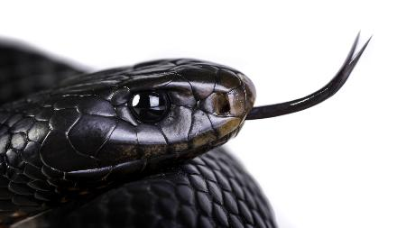 Snake Catcher & Removal Brisbane - Elite Snake Catching Services - Wynnum West, QLD 4178 - 0434 146 109   ShowMeLocal.com