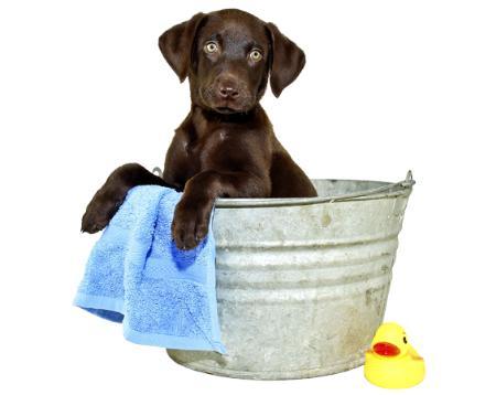 Sleek & Chic Dog & Cat Groomers - Vale Of Glamorgan, South Glamorgan CF62 1FS - 01446 744633 | ShowMeLocal.com