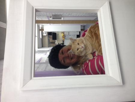Little Brooke Cattery - Heathfield, East Sussex  TN21 0AN - 01435 205206 | ShowMeLocal.com