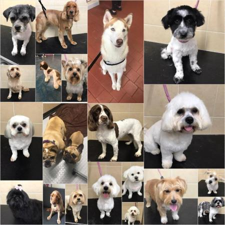 Noah's Ark Dog Grooming - Hull, North Yorkshire HU3 4AD - 07842 833310 | ShowMeLocal.com
