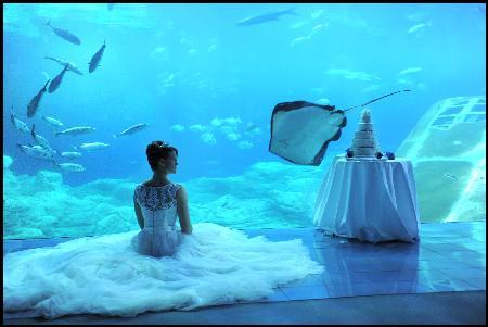 Focus Weddings - Plymouth, Devon PL1 4QJ - 07722 317053 | ShowMeLocal.com
