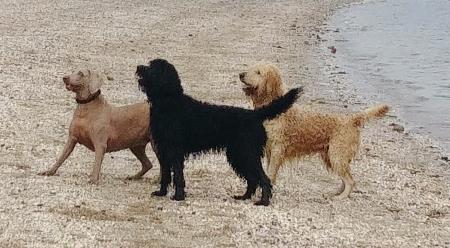 Livingston Dog Walking - Livingston, West Lothian EH54 6SP - 01506 799169 | ShowMeLocal.com