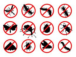 Restaurant Pest Control Brisbane