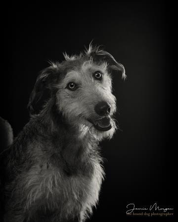 Hound Dog Photography - Eversley, Hampshire RG27 0PJ - 01276 300210   ShowMeLocal.com