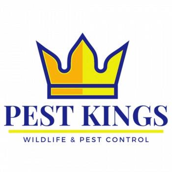 Pest Kings Wildlife & Pest Control Newmarket