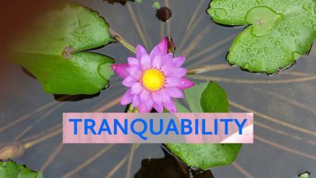 Tranquability - Randwick, NSW 2031 - 0408 296 670   ShowMeLocal.com