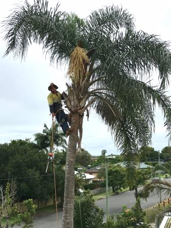 Mick Brewer Tree Services