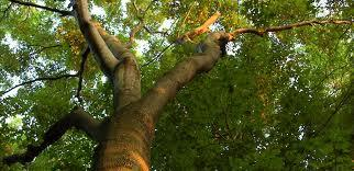 Billy's Tree Service - Jonesboro, GA 30236 - (770)504-6195 | ShowMeLocal.com