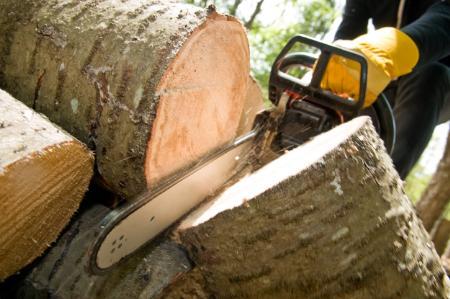 Campos Greenview Tree Service - Walnut Creek, CA 94596 - (925)250-1603 | ShowMeLocal.com