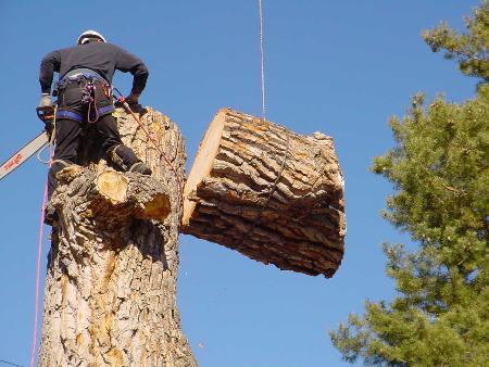 Skyline Tree Services - Claremont, NC 28610 - (828)312-1861 | ShowMeLocal.com