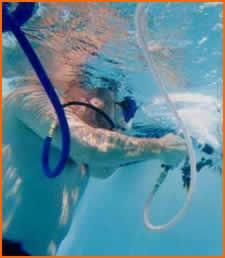 Ernie's Pool Service Inc. - Metairie, LA 70003 - (504)456-0727   ShowMeLocal.com