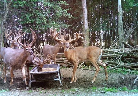 Lowlands Whitetails - Lowville, NY 13367 - (315)376-2190 | ShowMeLocal.com
