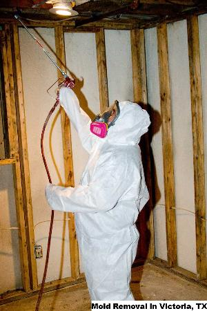 Mold Removal - Victoria, TX 77901 - (888)547-2290 | ShowMeLocal.com