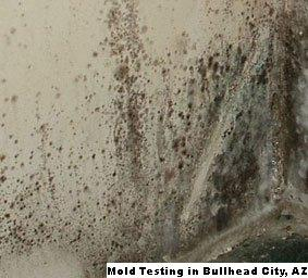 Mold Testing - Bullhead City, AZ 86426 - (888)351-0399   ShowMeLocal.com