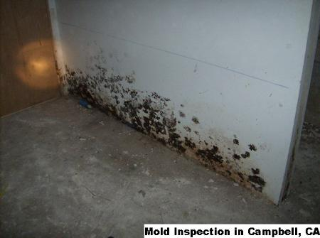 Mold Inspection - Campbell, CA 95008 - (866)413-4411   ShowMeLocal.com