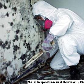 Mold Inspection - Allentown, PA 18102 - (866)413-4411 | ShowMeLocal.com