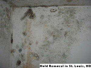Mold Removal - St. Louis, MO 55426 - (888)547-2290 | ShowMeLocal.com