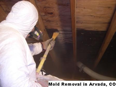 Mold Removal - Arvada, CO 80002 - (888)547-2290 | ShowMeLocal.com