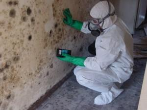 Mold No More - Sterling Heights, MI 48312 - (586)782-3254 | ShowMeLocal.com