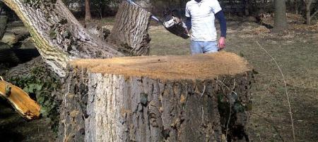 J & J Affordable Stump Grinding - North Canton, OH 44720 - (330)704-9980 | ShowMeLocal.com