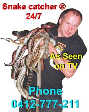 Snake Catcher - Melbourne, VIC 3000 - 0412 777 211 | ShowMeLocal.com