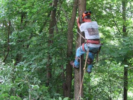 Tree Service Greenville - Greenville, SC 29601 - (864)501-0503 | ShowMeLocal.com