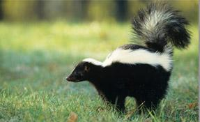 Hamilton Wildlife - Contact Us For Effective Animal Control - Hamilton, ON L8V 3Z1 - (289)799-3655   ShowMeLocal.com