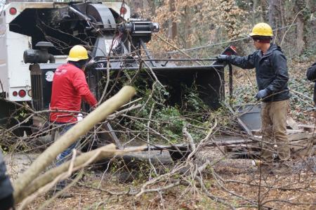 Fast Tree Removal Services Atlanta - Atlanta, GA 30326 - (404)220-9965 | ShowMeLocal.com