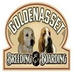 Golden Asset Kennels - Everett, ON M5C 2M6 - (705)434-0242 | ShowMeLocal.com
