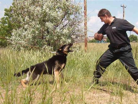 Canine Training By Chris - Naperville, IL 60563 - (630)234-8906 | ShowMeLocal.com