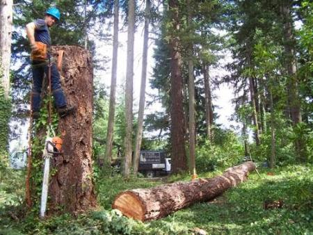 Dallas Tree Pros - Mckinney, TX 75070 - (214)799-4437 | ShowMeLocal.com